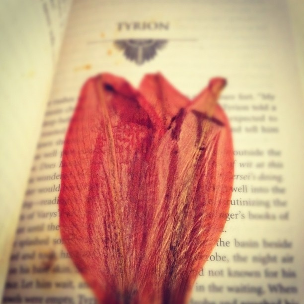 "Flower I pressed in my copy of ""A Clash of Kings"""