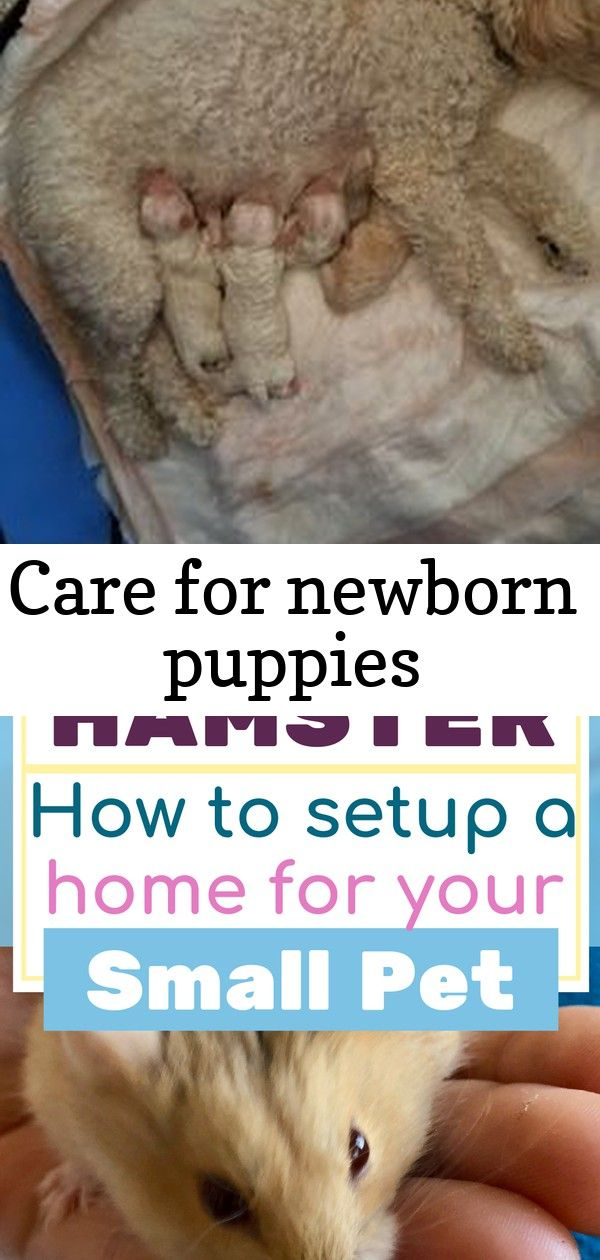 6 Ways to Care for Newborn Puppies wikiHow Thinking