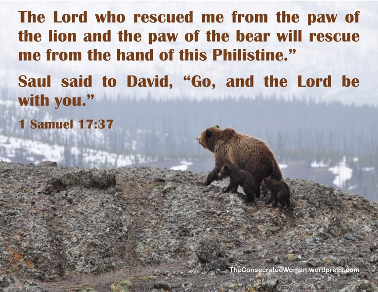 """Verse of the Day: 1 Samuel 17:37  The Lord who rescued me from the paw of the lion and the paw of the bear will rescue me from the hand of this Philistine."""" Saul said to David, """"Go, and the…"""
