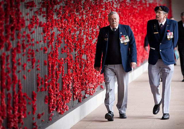 Red Poppies for Remembrance Day and ANZAC Day Information