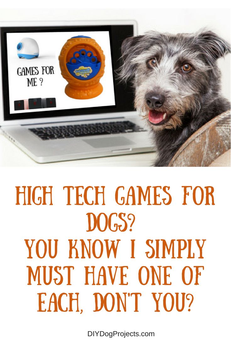 DIY Dog Projects - We've picked some of the very best High Tech Dog Games