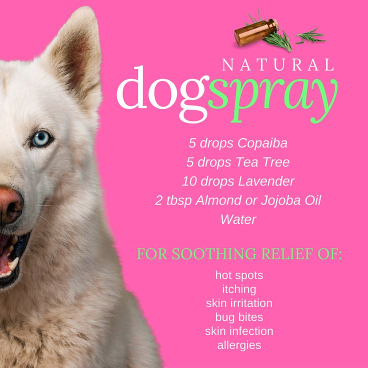 Direction: Mix all ingredient in a spray bottle with water.  Natural dog spray made with essential oils - for relief of allergies, hot spots, itching, skin irritation, bug bites and skin infection. (c (Skincare Ingredients Recipes For)