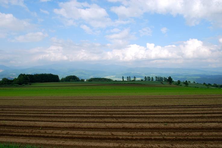 Niseko's picturesque fields