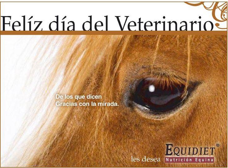 Día del Veterinario 17 de agosto