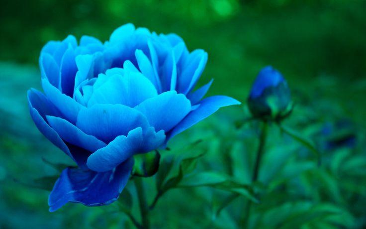 The Blue Hour (Dû Luin) 0deb12b24bc02f68eb0a9a51609126c2