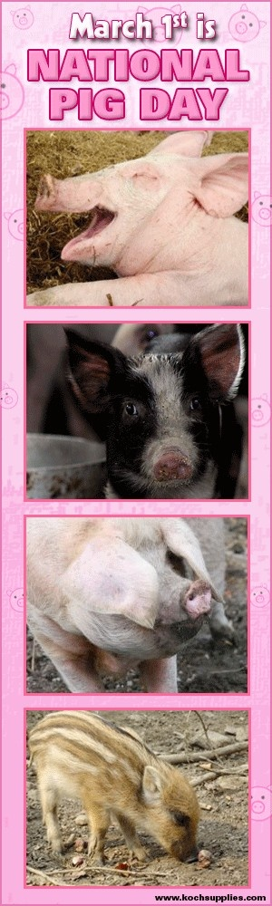"If you love pigs, please PIN IT!  National Pig Day began in 1972 and is an event held annually on March 1 in the United States to celebrate the pig. The purpose of National Pig Day is ""to accord the pig its rightful, though generally unrecognized, place as one of man's most intellectual and domesticated animals."""