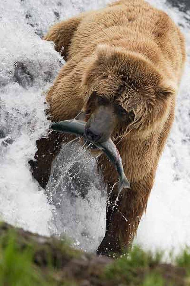 """""""A Nice Catch ~ Mr. Bear!"""""""