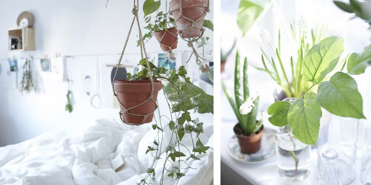 Mit hängenden Pflanzen rund um dein Bett verwandelst du dein Schlafzimmer in ein Meer aus Grün.