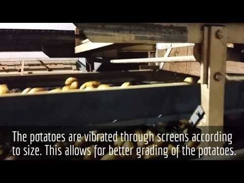 Rollo Bay Holdings - Receiving Area  We made our first YouTube video showing the process before the potatoes are graded and bagged. Check out our channel at Keenan Potatoes PEI.