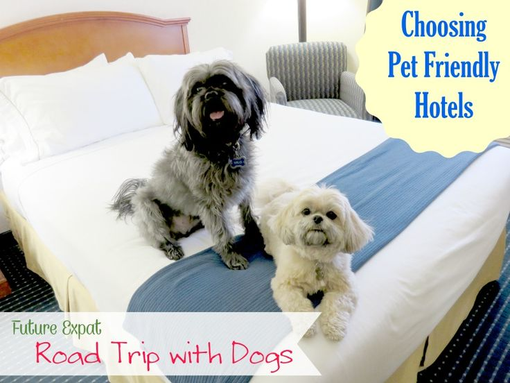 Road Trip With Dogs Choosing Pet Friendly Hotels Future Expat