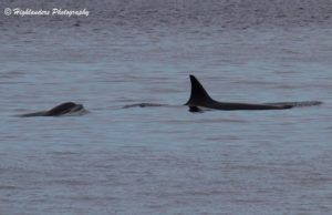 Orcas, Humpback & more!