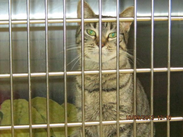 Gallery of council pounds and their impounded animals - Rescue Rex #Wagga Wagga NSW #Australia