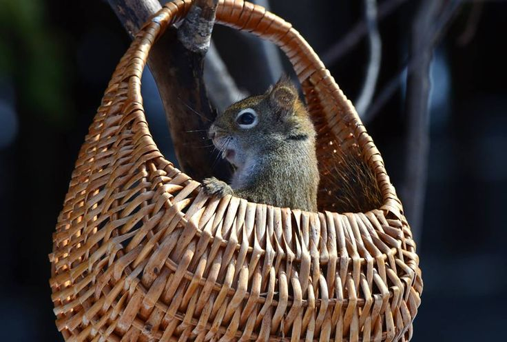 écureuil coquin