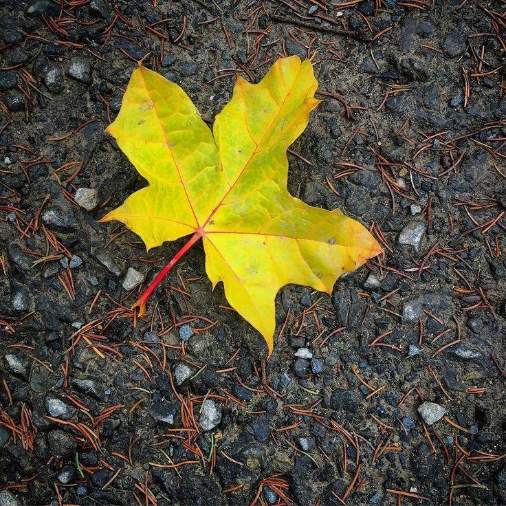 Podzim... #javor #homeland