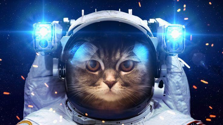 кот космонавт life картинка: 14 тыс изображений найдено в Яндекс.Картинках