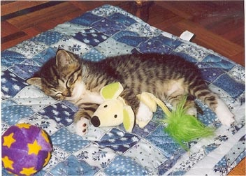 Sweet little kitten with her Mr. Mouse.