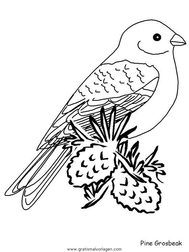 pinegrosbeak in tiere gratis malvorlagen  vogel