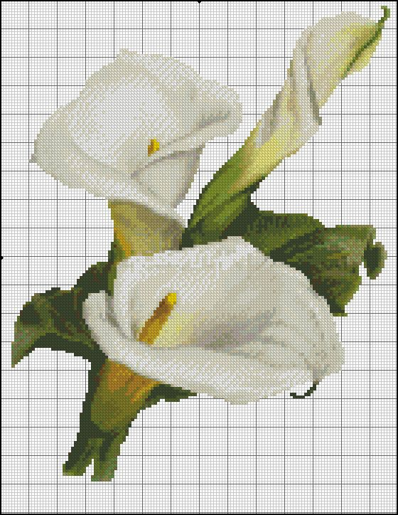 white calla1