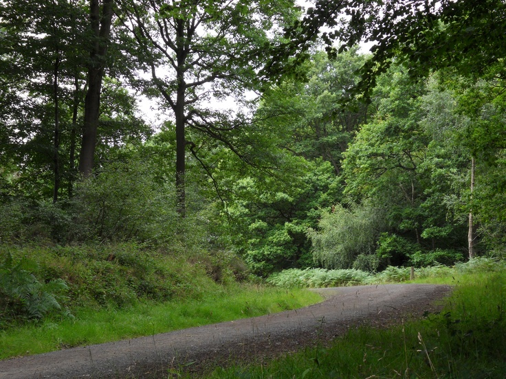 Wyre Forest (Far Forest) straddles the borders of Worcestershire and Shropshire.  Well maintained forest with clearly marked trails for walkers, horseriders and cyclists.  There are some lovely places to stop for picnics and there is a Go Ape facility for the more adventurous.