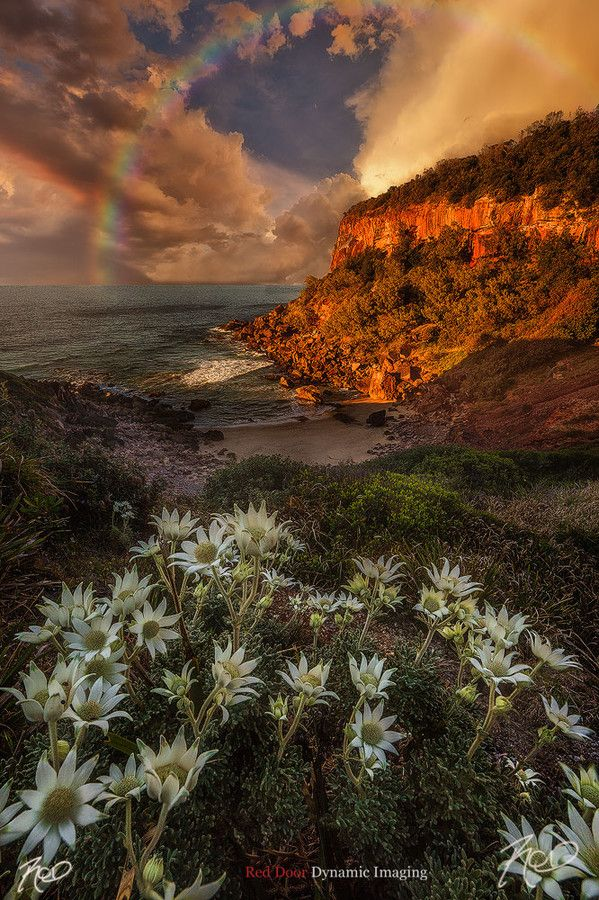 ~~Light and Shade ~ rainbow and flannel flowers, NSW Mid North Coast North of Taree, Australia by Rod Trenchard~~