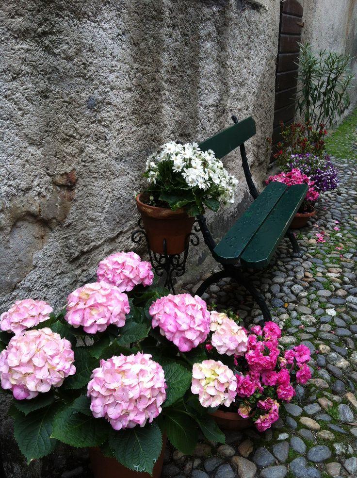 bench, flowers, green, spring, italy, lago di orta, hydrangea, hortensia,