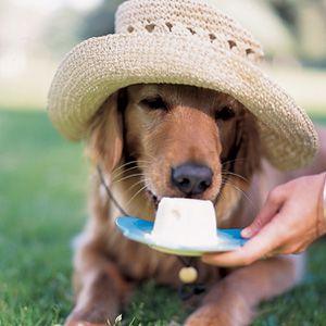Inexpensive Homemade Frozen Dog Treat Recipe