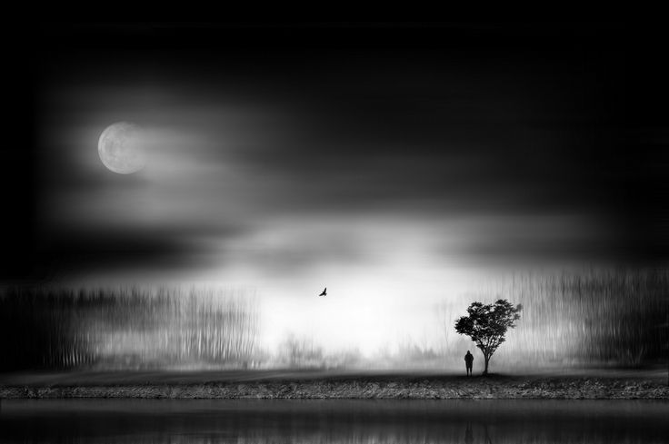 Moonlight by Sherry Akrami on 500px