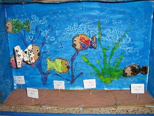 40 best images about animaux on pinterest animales - Poisson shark aquarium ...