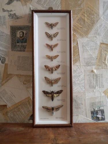 P Moth Decorator 202 best images about ...