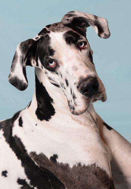 behavior hold pending adoption big dogs huge paws inc dogs