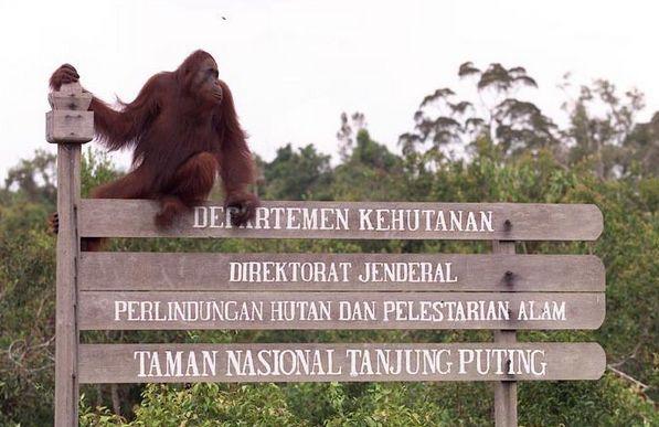 Menjelajahi 5 Tempat Satwa Liar di Indonesia Buat Yang Doyan Berpetualang Kudu Masuk!  Dagelan