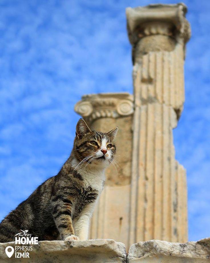 Вартовий Ефесу та начальник бібліотеки Цельса; Я кіт,  наказую усім мене любити!  #Ephesus #CelsusLibrary