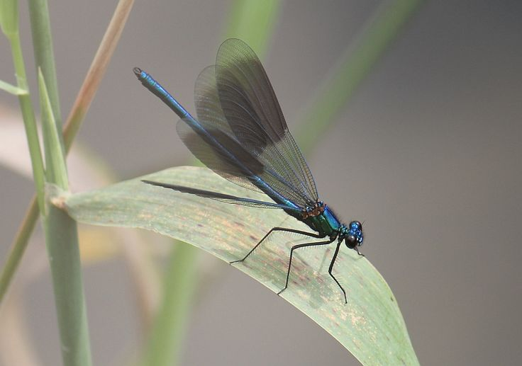 My Photo Gallery - Dragonfly