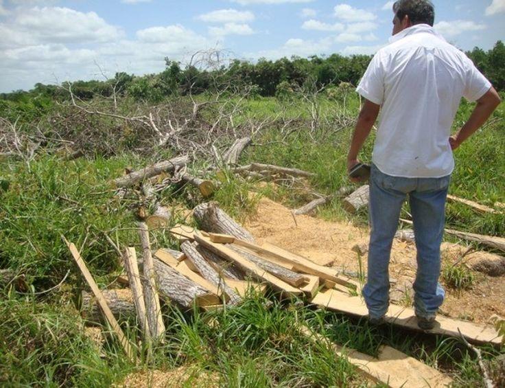 Suspende Profepa Actividades En Plantación De Palma Africana Aceitera Por Dañar 107 Hectáreas