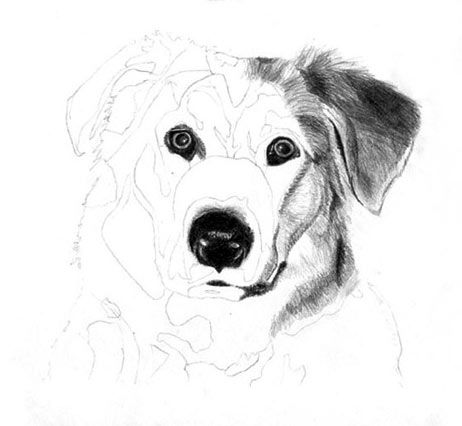 How to draw a dog, free graphite art lesson