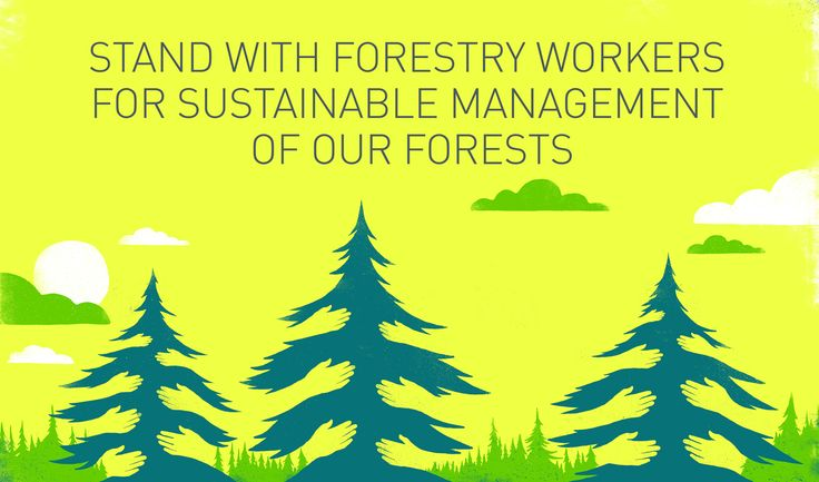 """""""Pellets made from industrial leftovers for local heating (not electricity production or exportation), essential oils, berries, medicinal plants, resins, solvents, culinary products and advanced building materials are only a few examples of the huge potential that a well-managed and future-oriented forestry sector has to offer"""""""