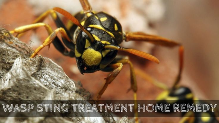 wasp sting treatment home remedy - Tried and Tested You can try Too