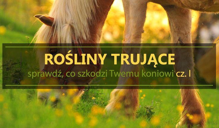 Rośliny trujące – sprawdź, co szkodzi Twemu koniowi