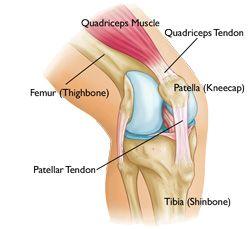Quadriceps Tendon Tear-OrthoInfo - AAOS