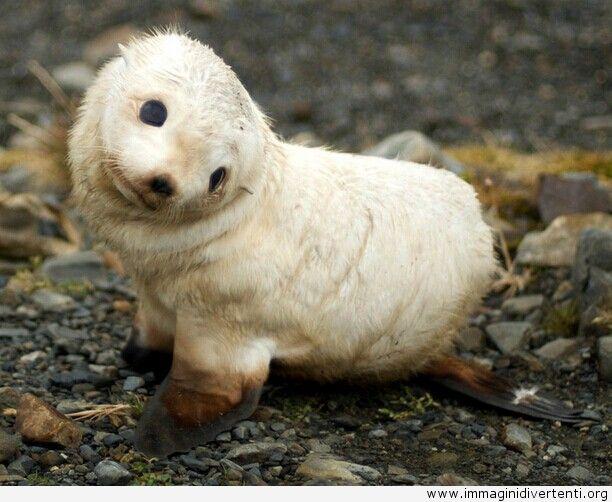Simpatico cucciolo di foca, Immagini Divertenti