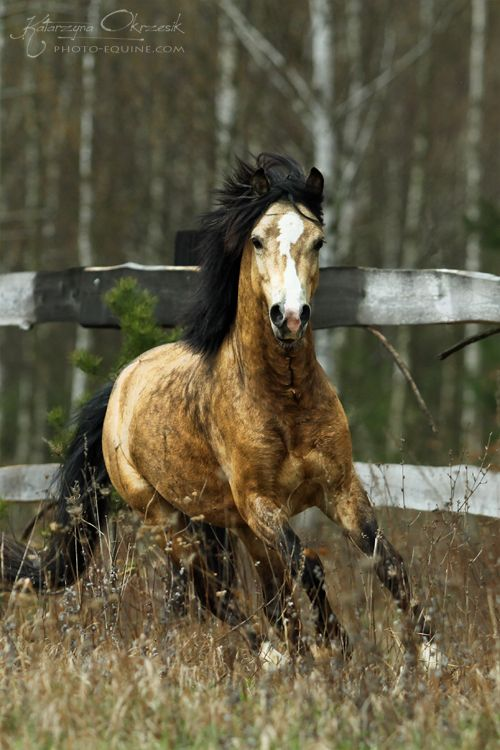 612 best Ponies and small horses Best of images on Pinterest - best of welsh pony coloring pages