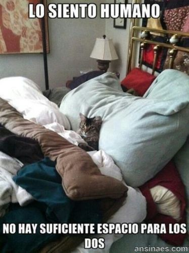 Fotos chistosas de gatos - Ya no hay lugar en la cama