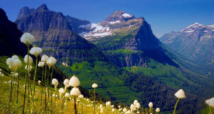 Glacier National Park, Ill be at the top of those mountains one day!Buckets Lists, Glacier Park, Glacier National Parks, Glacier Natl, Going To The Sun Roads, Highline Trail, Bears Grass, Bucket Lists, Images B United
