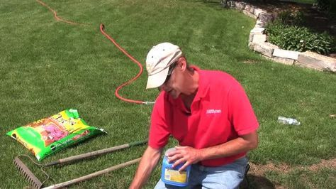 Grow lush grass, even if your lawn looks worn out and unhealthy. By using a combination of soil additives, fertilizers, and tender, loving care, you can change your lawn from scraggly to golf-course green in one season.