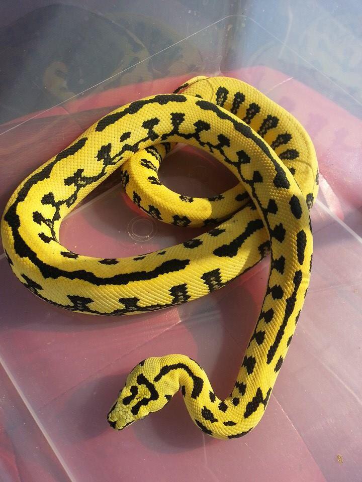 Una problema grande en Costa Rica es los serpientes venenosas.