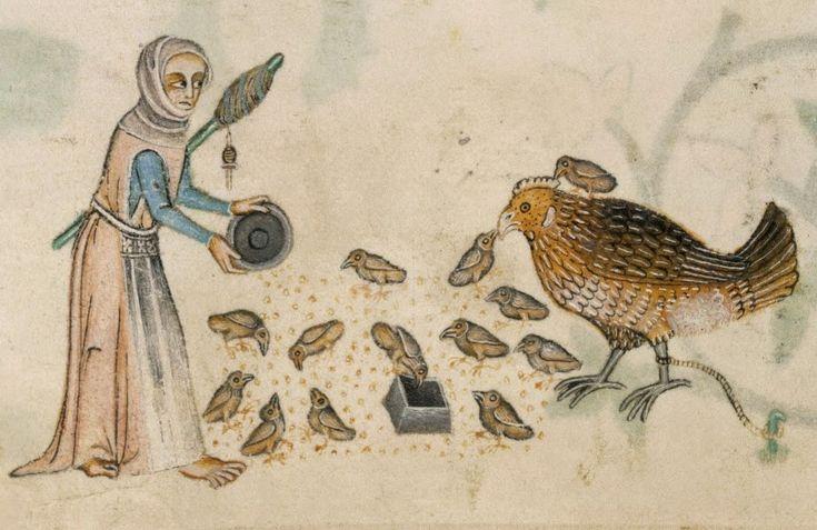 Pratiche religiose medievali e l'evoluzione dei polli domestici