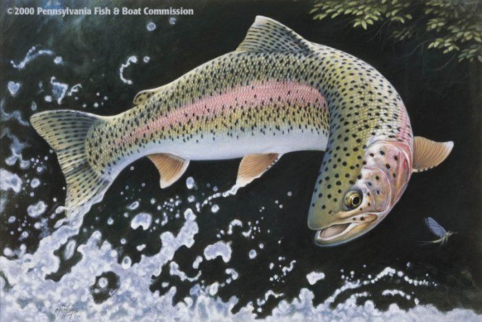 17 best images about painting inspirations on pinterest for Best trout fishing in pa