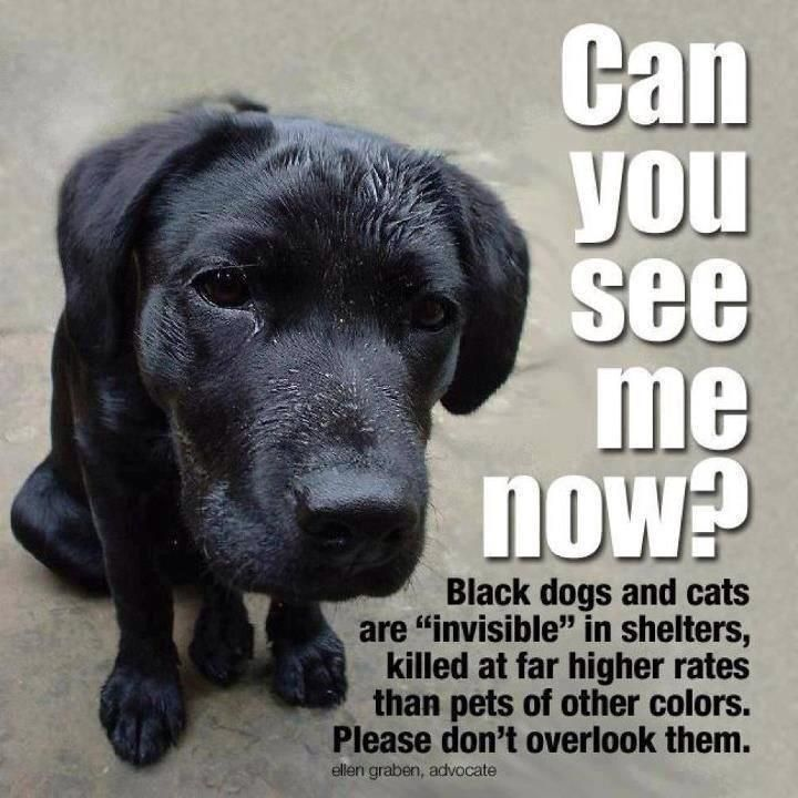 159 best Adopt a Shelter/Homeless Pet images on Pinterest | Animal rescue, Animals and Shelters