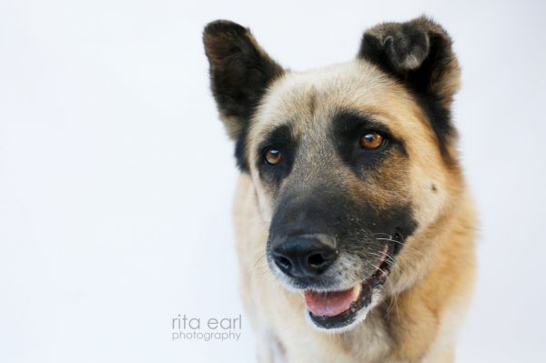 Dogs For Adoption Petfinder Dog Adoption Pets Pet Search