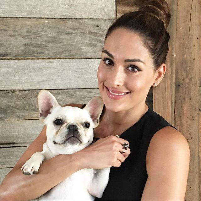 Nikki Bella S Dog Winston